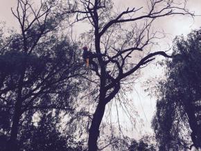 Galeria Wycinka drzew